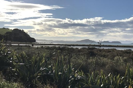 Beautiful Pohutukawa Coast - Half Day Private Tour: Beautiful Pohutukawa Coast - Half Day Private Tour