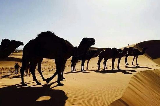 2-Day small group desert tour from fes
