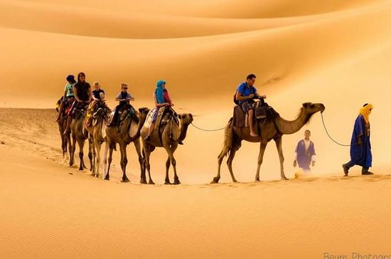 Camel Treks i öknen av Merzouga