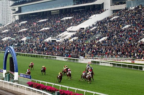 Enjoy the horse races as a VIP guest...
