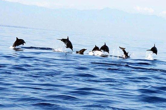コスモの一泊ツアー:LovinaDolphin、TamanAyunTempl…