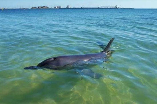 Bunbury Dolphins Discovery Tour - Fly...