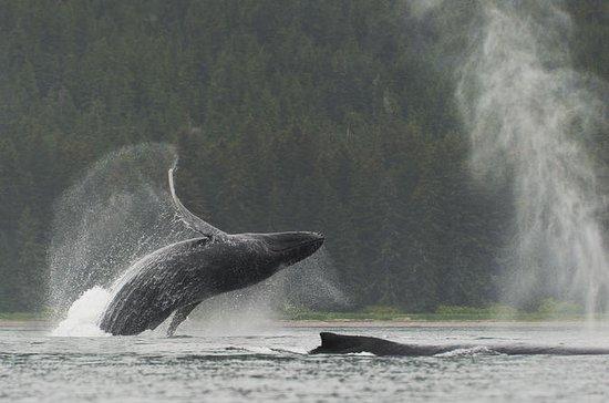 Juneau Shore Excursion: Paddle with...