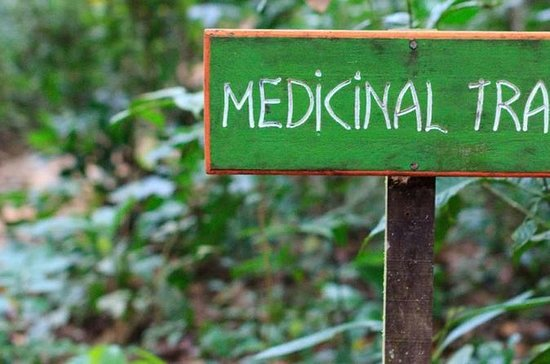 Medicinsk spår guidad av en maya ...