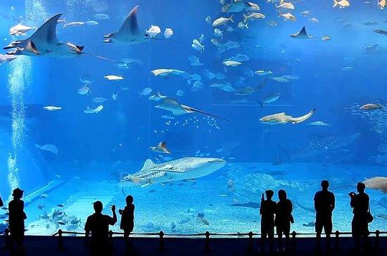 Entrada al acuario Jeju Aqua Planet