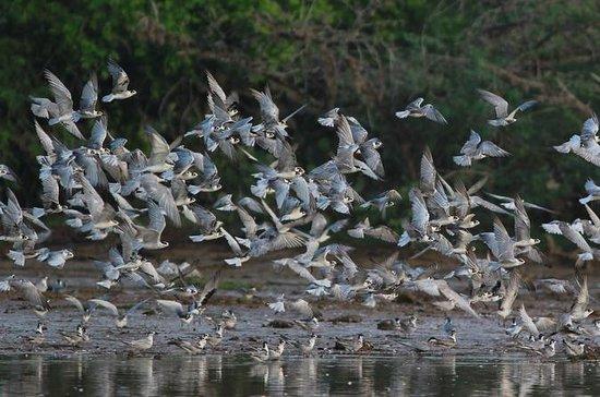 Bundala Birding Paradise - All...