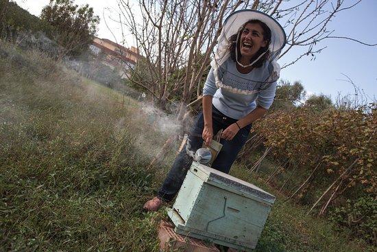 Mittels Rauch werden die Bienen beruhigt.