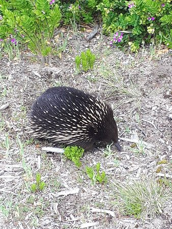 Cape Otway Foto