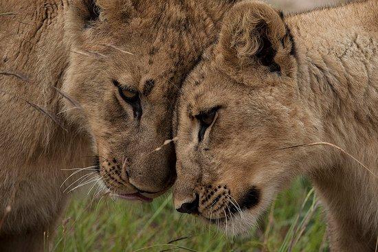 Primate Journeys Africa