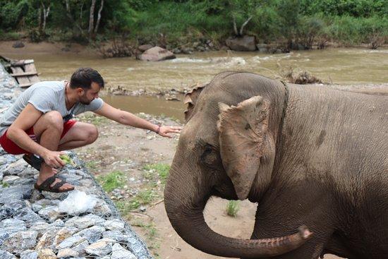 Feeding elephants.