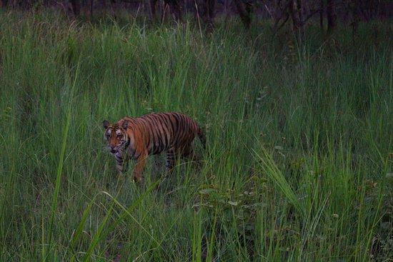 Фотография Национальный парк Дудхва