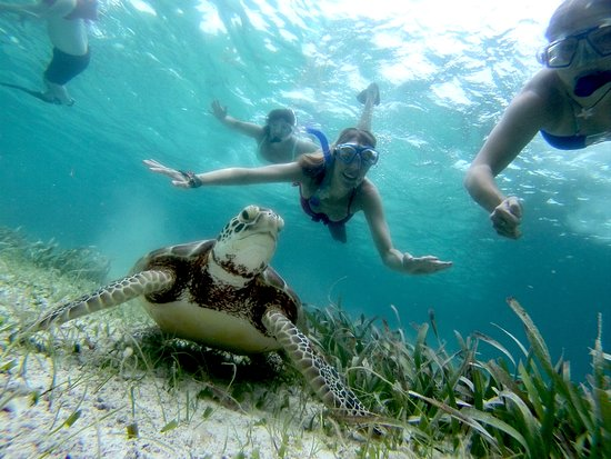 Sirena Azul Sailing Tours: Snorkel with Sea Turtles
