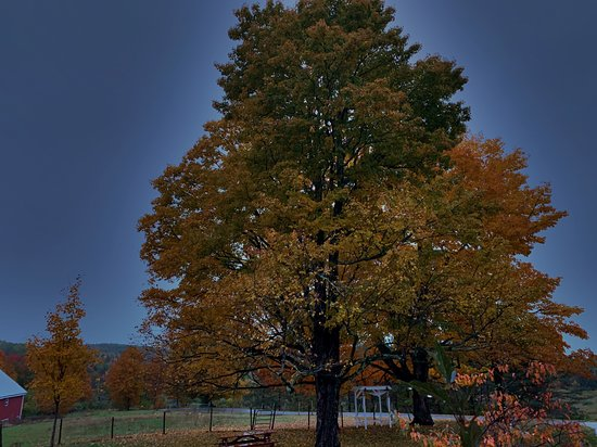 Maple Hill Farm Inn and Conference Center: Fall foliage at Maple Hill.