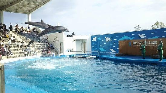 Sendai Uminomori Aquarium