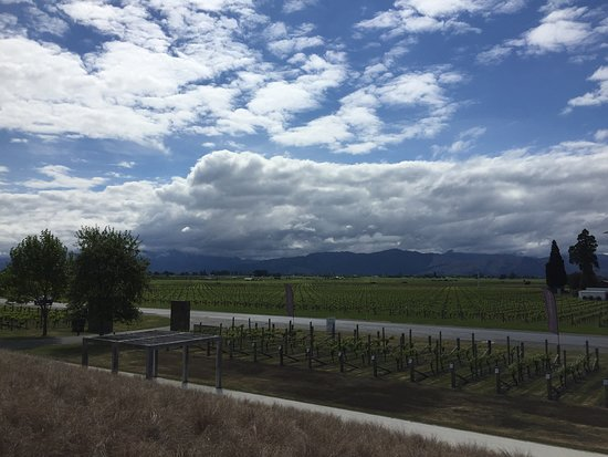 View from Wither Hills winery