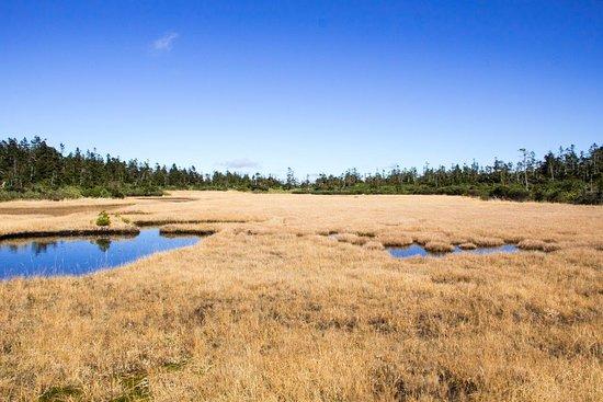 Kuroyachi Wetland