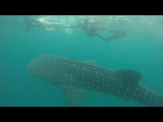 Afro Whale Shark Safari – fénykép