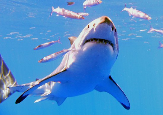 This Is My Shark Life