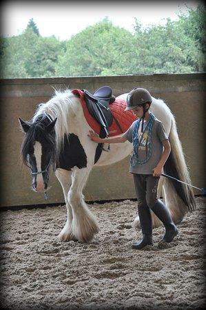Une autre manière de découvrir le cheval et le langage qu'il comprend...