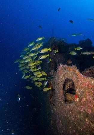 Réunion Formation Plongee