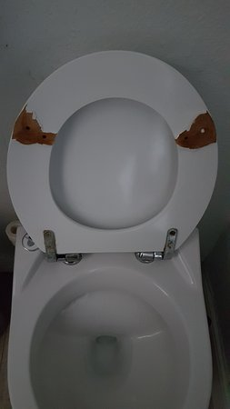 Knackered toilet seat, rubber feet missing. I leave you to imagine what the smell was like