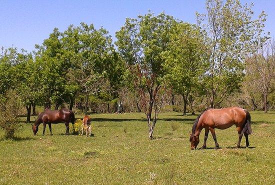 Dayman no es solo termas, también es estancias y campos de una calidez típicamente uruguaya - Dayman is not only hot springs, it also has farms and fields with typical Uruguayan warmness.