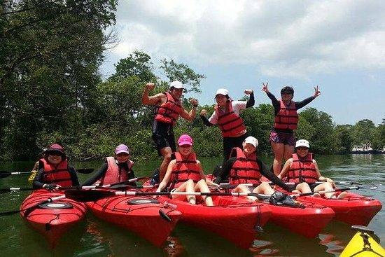 Ubin Bisect Kayaking
