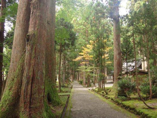 大木の並木がありました