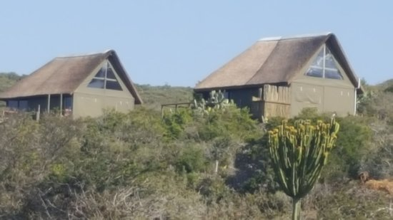 Greater Addo, Südafrika: Glamping Tents