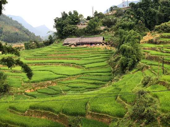 Go SaPa Trek-Tour : Rice terraces just below Sapa town.