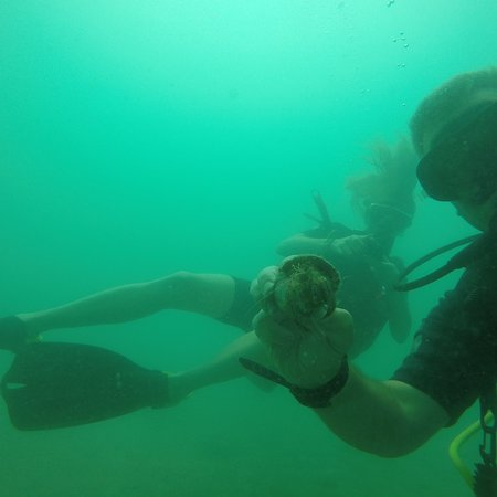 EcoSea Diver-billede