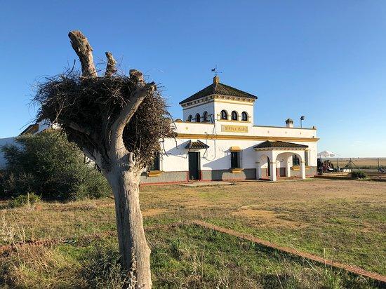 Zdjęcie La Puebla del Rio