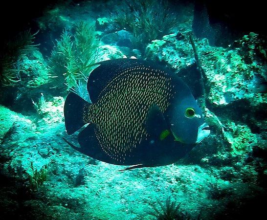 Gaspar's Dive N Board: Key Largo group dive trip