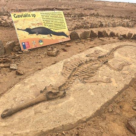 Parque Paleontologico De Caldera