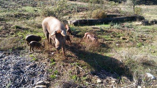 El Madroño, España: ANIMALES LIBRES Y FELICES