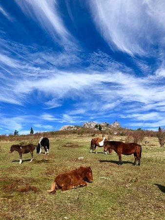 Grayson Highlands State Park Foto