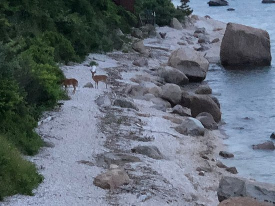 East Marion, Νέα Υόρκη: Deer on the beach of the Long Island Sound