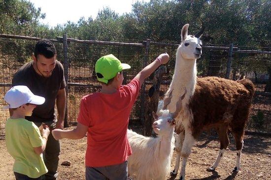 Ribera, Italia: Bambini danno da mangiare al Lama e alla Capra Girgentana