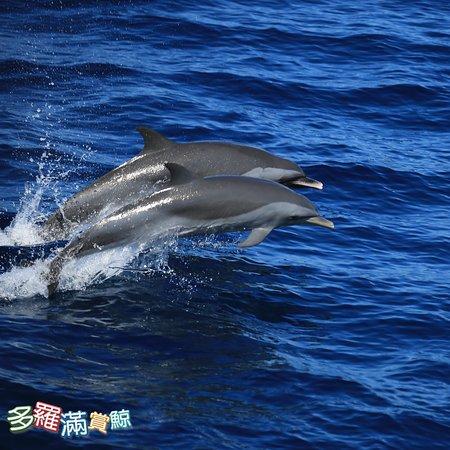 關於賞鯨的問題,都歡迎您來提問 https://reurl.cc/5oXVy