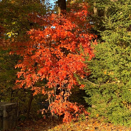 Very enjoyable & Beautiful Fall colors