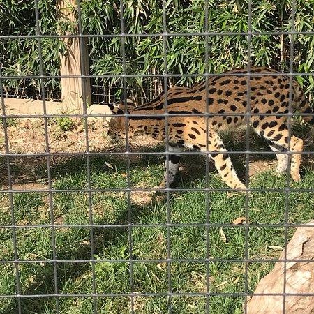 Feeding the giraffes - Picture of Tanganyika Wildlife Park