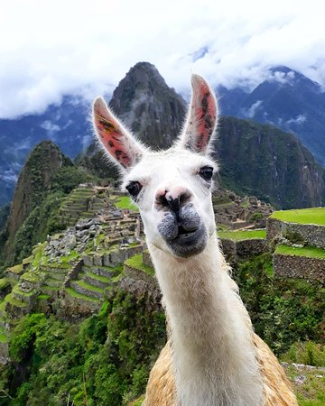 Picchu Travel