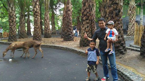 Ảnh về Bali Zoo