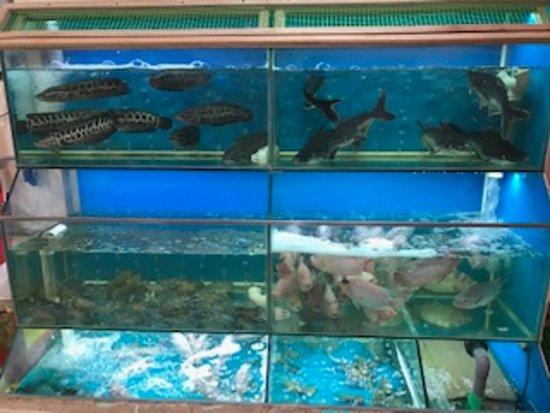 BB Park Bukit Bintang: Live fish to choose