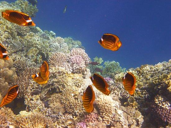 Lagona Divers - Marsa Alam