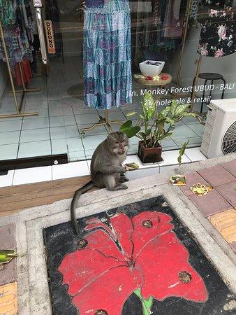 Monkey échappé dans la ville