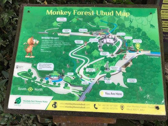 Plan monkey forest