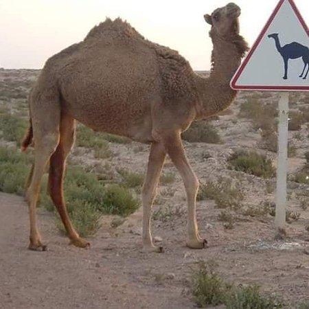 5 dias desde Marrakech al desierto de merzouga
