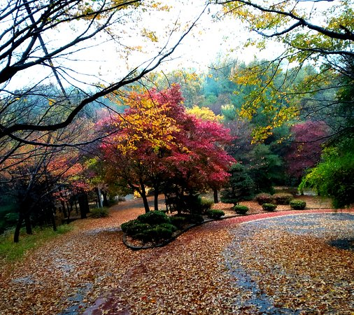 Daejeon, Zuid-Korea: Autumn colors on a wet day at Bomunsan