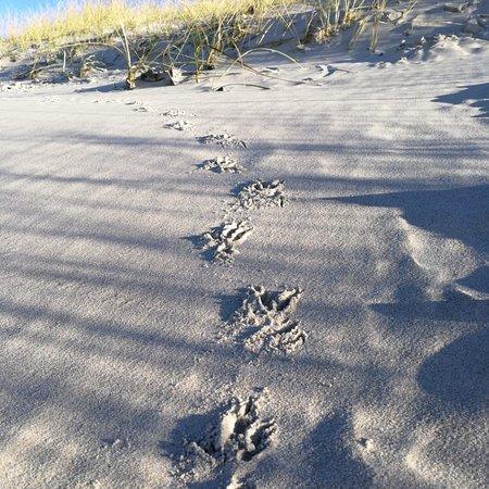 Foto de Curonian Spit / Kursiu Nerija National Park